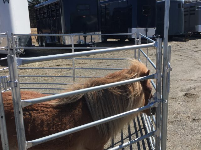 barrière poney miniature